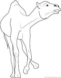 Small Picture Coloring Pages Camel Having A Rest Coloring Page Free Printable