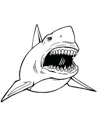 Outline Of A Shark