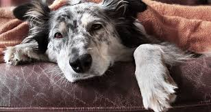early signs your dog may have cancer