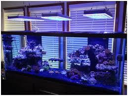 Aquarium furniture design Low Profile 20 Most Attractive Collection Of Aquarium Furniture Designs Reverb Himalayanhouselaus Small Wall Fish Tank Fresh 20 Most Attractive Collection Of Aquarium