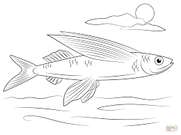 Tropical Fish Coloring Pages Free Printable Pictures