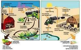 organic farming vs factory farming essay   mfacourses   web fc  comorganic farming vs factory farming essay