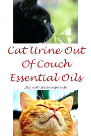 clean urine from couch clean urine from couch clean cat from couch cat no clean urine from couch inspirational cat