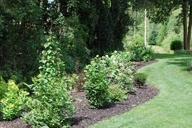 Small Picture Garden Design Garden Design with Shrubs eBay with Landscaping