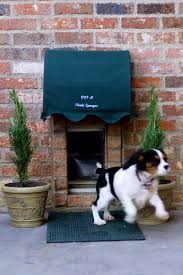exterior back door with dog door. cover with hinge so can clean easily, but furbabies safe. replace the plant cat grass and catnip. doggy door - pet exterior back dog