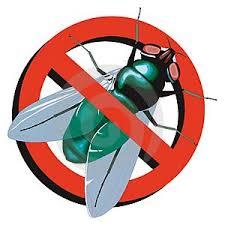 Eliminar as moscas da cozinha http://www.cantinhojutavares.com