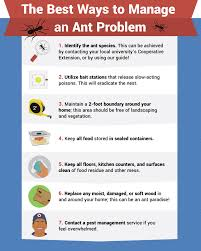 eliminating ants how to get rid of ants