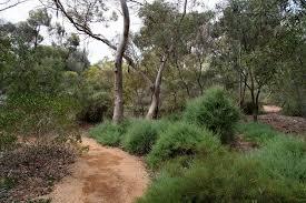 Small Picture Native Australian Garden Design aralsacom