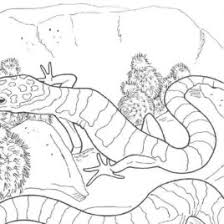 Small Picture Desert Animals Coloring Pages Free Desert Tortoise Coloring Page