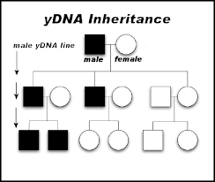 Ancestry Diagram A Beginners Guide To Using Dna In Family History Back To Our Past