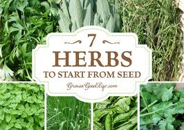 growing herbs is easy because once the plants are established they require very little maintenance