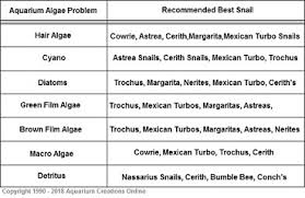Saltwater Snails 18 Best Saltwater Aquarium Algae Snails