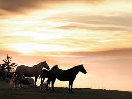 wild horses sunset. Unique Horses Animals Photograph  Wild Horses Sunset 3 By Leland D Howard To D