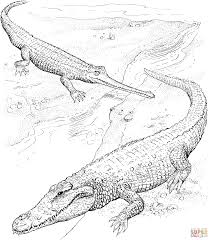 Small Picture Crocodile coloring pages Free Coloring Pages