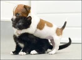 puppy and kitten fighting.  And Kittens And Puppies Playing Throughout Puppy Kitten Fighting