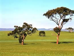 Природа растения и животные Австралии Растительный мир Австралии