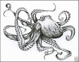 Small Picture Giant Octopus Drawing Scrimshaw Graphics Pinterest Octopus