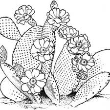 Small Picture Sketch of Cactus Coloring Pages Best Place to Color