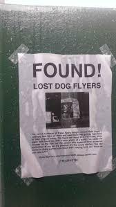 how to make lost dog flyers funny lost dog sign sidewalk dog