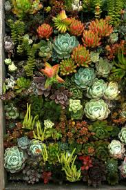 Succulents are so beautiful! I've posted a picture of succulents before,  but I just couldn't resist! Look at all these beautiful colors, and imagine  owning ...