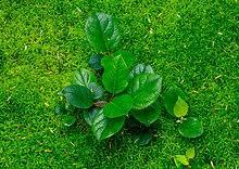 Kuvahaun tulos haulle vihreä