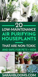 20 air purifying houseplants safe for