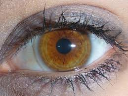 6 Rare And Unique Eye Colors Owlcation