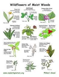 Herb Plant Identification Chart Wild Flower Identification Chart Flower Identification