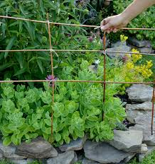 how to keep dogs out of herb garden ideas