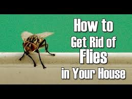 Natural Reme s to Get Rid of Flies Housefly How To Get Rid of
