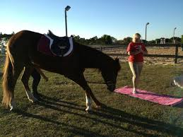 Dream Catchers Horse Ranch Yoga with the horses Picture of DreamCatcher Horse Ranch and 14