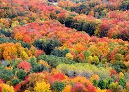 fall color views in michigan