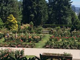 washington park rose garden in portland oregon