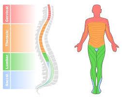 Nervous System Bioninja