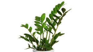 homelife top 15 indoor plants bathroom plants low light bathroom plantation shutters