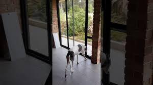 diy dog doors. Full Size Of Sliding Door:sliding Door Dog Insert Diy Xxl Chesapeake Large Doors