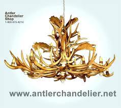 antler chandelier for deer antler chandelier real whitetail mule antler chandelier for uk