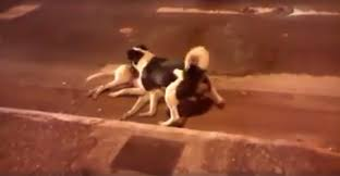 heartbreaking moment dog refuses to