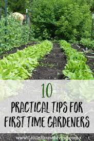 practical tips for first time gardeners