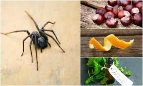 How To Get Rid Of Spiders In Bedroom