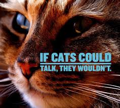 Cat Quotes 25 Sayings Only Cat Lovers Will Understand