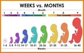 26 Weeks Is How Many Months Chart Official Weeks To Months Chart Babycenter