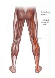Oefeningen aan bilspieren doen pijn, strakke billen Trainen
