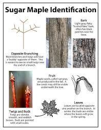 44 Best Maple Syrup And Other Tree Syrups Images On Pinterest Backyard Maple Syrup