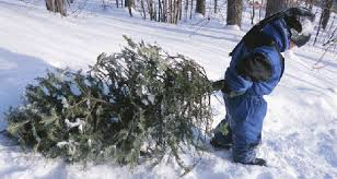 ... Cut your own Christmas tree from a national forest