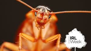 How To Kill Cockroaches According To Science