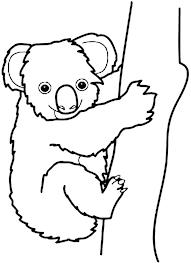 australian koala bear coloring page color luna beauteous bears