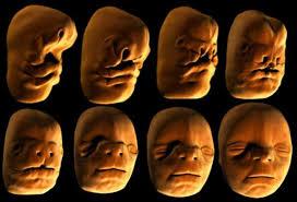 مراحل شکلگیری صورت جنین در رحِم مادر