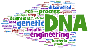 essay on genetic engineering   essay exampleessay portfolio examples