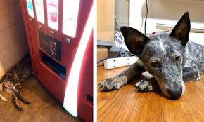 Dog Vending Machine Adorable Man Stopped For Soda Off Highway And Found Dog Hiding Behind Vending